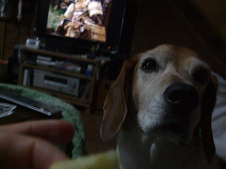 焼リンゴ食べてみよ~