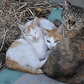 Photos: Tokyo Lost  Cat_猫の智慧_DSC_3181