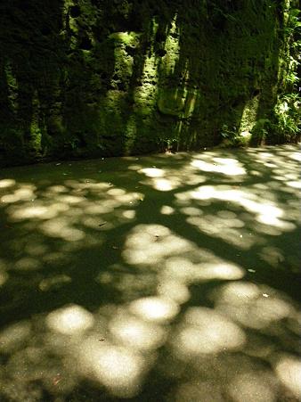 木漏れ日のワルツ