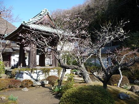 110225-海蔵寺 (8)