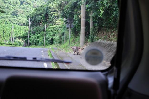 写真: サルだー!
