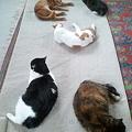 写真: 猫密度 5