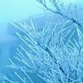 写真: 霧氷