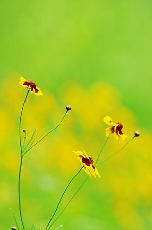 散策路の花。