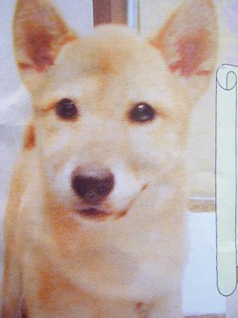 迷い犬ポスター (3)