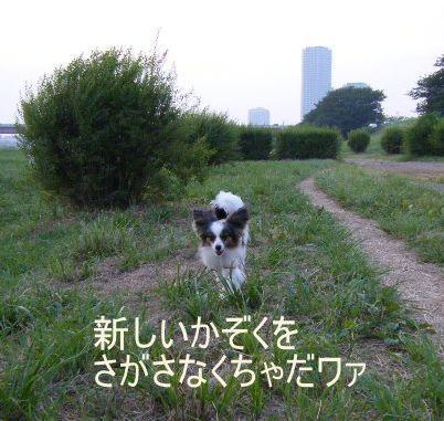 aug1 (5)pecco加工
