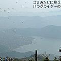 写真: フェワ湖とパラグライダー群