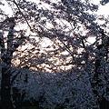 Photos: 20110505_183115