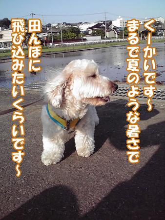 100517 くーかい of the day 1