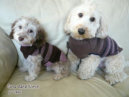 2ワンでセーター 2