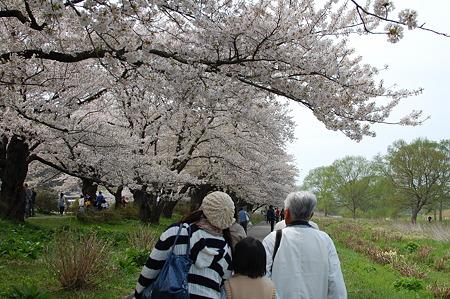 桜キレイだね