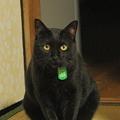 写真: 黒猫鎮座
