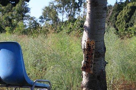 2010.09.25 追分市民の森 アスパラ畑