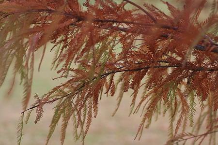 2010.11.18 和泉川 紅葉