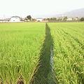 Photos: 【RT @fujiwara...