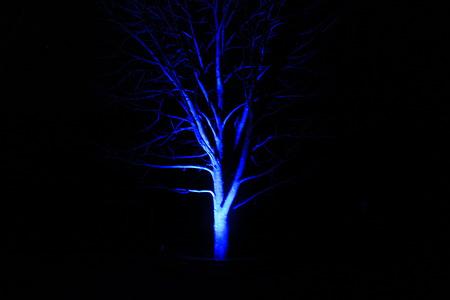 不気味な木のライトアップ
