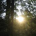 Photos: 林からこんばんわ