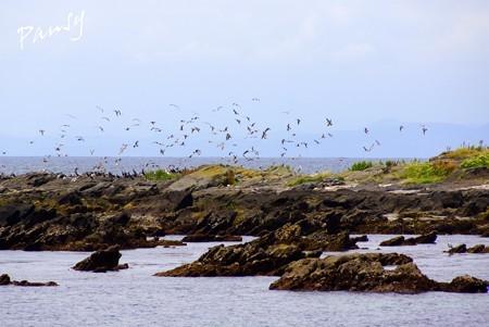 海鳥たちの舞・・