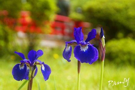 萬葉植物園にて・・9