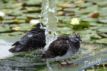 水遊び~1