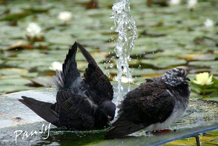 水遊び~2