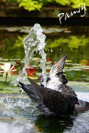 水遊び~4