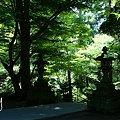 写真: 緑の涼~