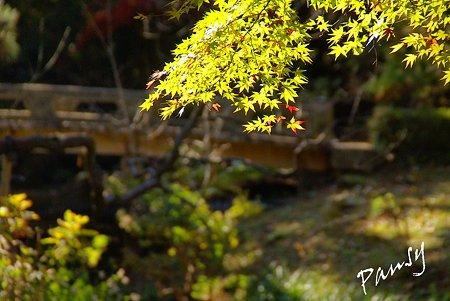 彩の樹林・・4