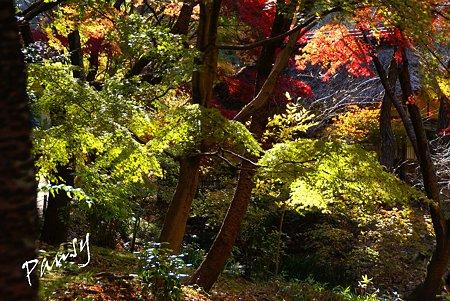 彩の樹林・・5