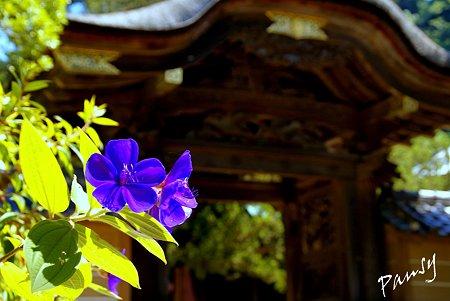 紫紺の彩・・