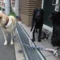Photos: やっと保護犬1頭になった