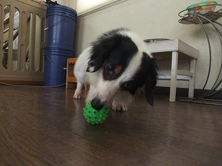 一人でボールで遊べます