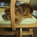 Photos: 椅子がすきな悠大
