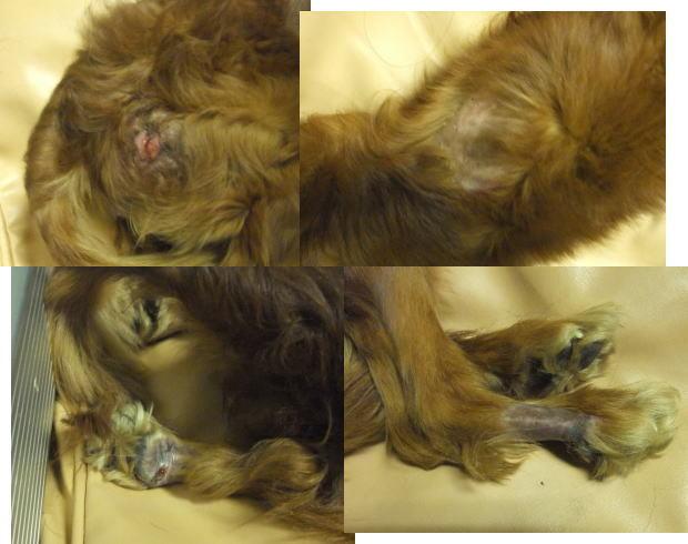 Photos: 保護直後の脱毛と床ずれ