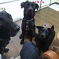Photos: (^w^) ぶぶぶ・・・
