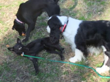大型犬との遊び方も心得ています