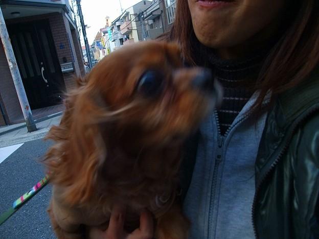 Photos: この間