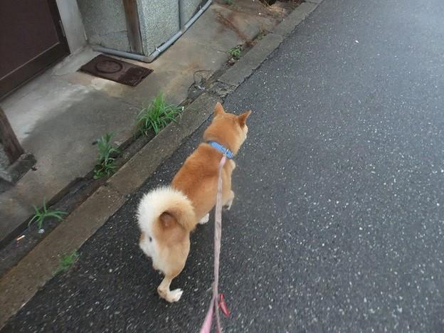 Photos: 柴君、家どこや~~?