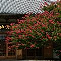 Photos: 長谷寺の百日紅!(20100821)