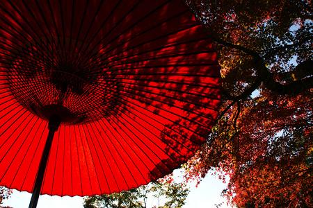 紅葉と番傘!(101111)