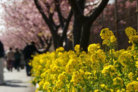 菜の花の小道!(110226)