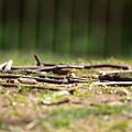 写真: とある日の午後、公園にて20090323_1