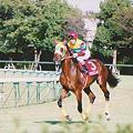 Photos: Agnes Gold(2001年神戸新聞杯)