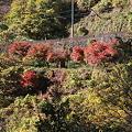 Photos: 101119-109紅葉
