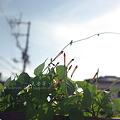 写真: 夏空
