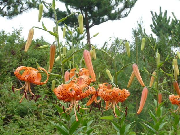 島の植物たち