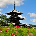 Photos: 大和路の花だより