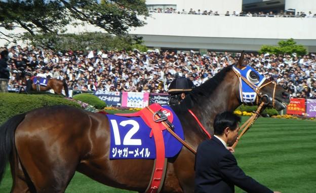 Photos: 2010-05-02 天皇賞(春) ジャガーメイル