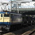写真: pf1041-20080303