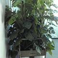 Photos: 植物が来た。